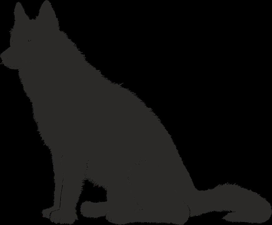 Koiralle opetettavat peruskäskyt